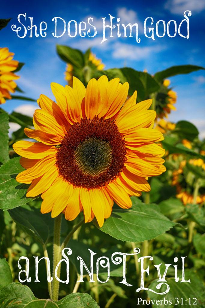 sun-flower-1621990